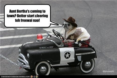 aunt bertha,costume,police,pug