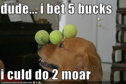 balance,bet,golden retriever,talent,tennis balls