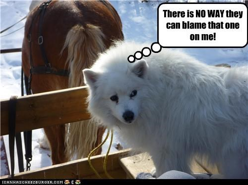 blame fart horse outside samoyed snow - 3662099200