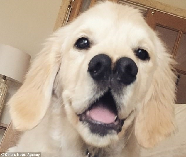 dog born with two noses