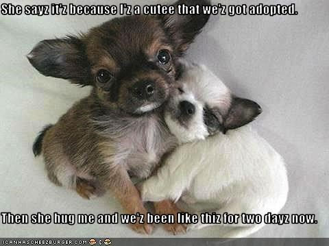 adopted,hug,puppies,puppy,whatbreed
