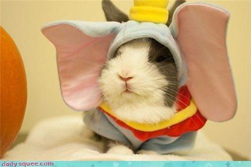 costume elephant guinea pig - 3663051264