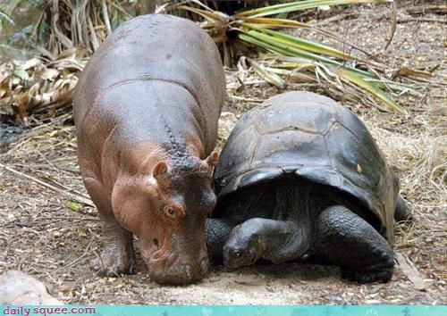 friends,hippo,turtle