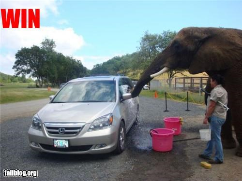 car wash,clean,elephant,failboat,zoo
