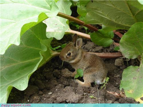 bunny dwarfed plant - 3663775232
