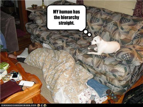 couch floor hierarchy human mixed breed sleeping terrier understanding