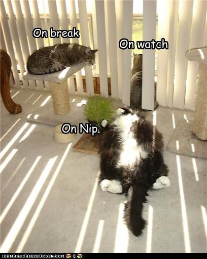 break caption captioned cat Cats differences duties nip watch