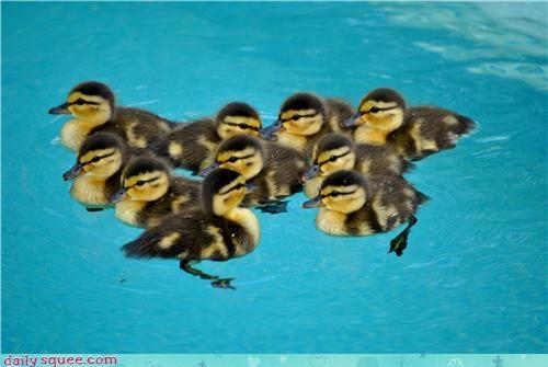 baby duck tiny