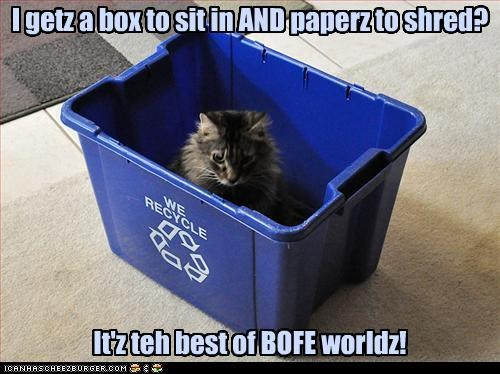 best of both worlds bin box caption captioned cat excited paper recycle recycling - 3665850368