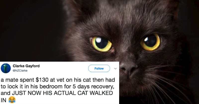 Guy accidentally grabs his neighbor's cat because he thinks it's his, and hilariousness ensues.