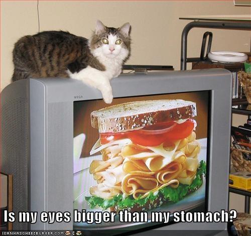 Cheezburger Image 3666139904