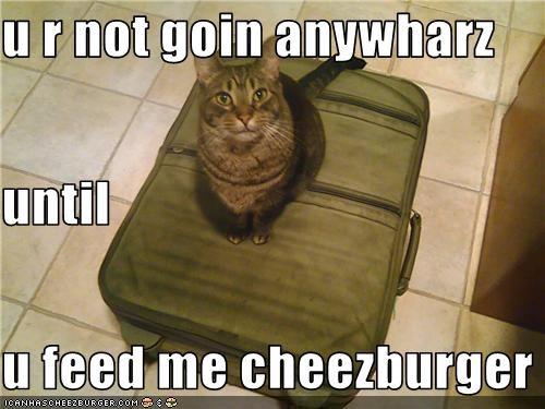Cheezburger Image 3666346240