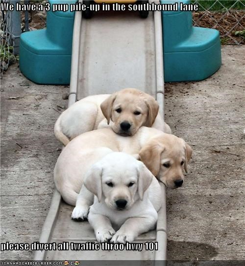 accident,Hall of Fame,outside,puppies,slide,traffic