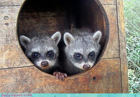 nerd jokes squee spree twins - 3668146944