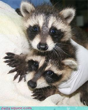 Qwantz fan fiction for some reason raccoon squee spree - 3668150272