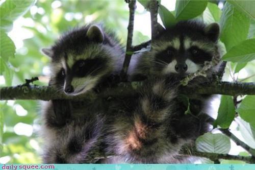 nerd jokes raccoon squee spree - 3668152064