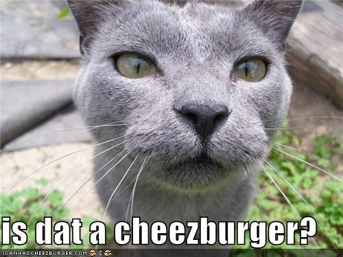 Cheezburger Image 3668202496