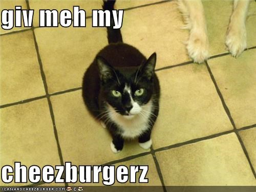 Cheezburger Image 3668515584