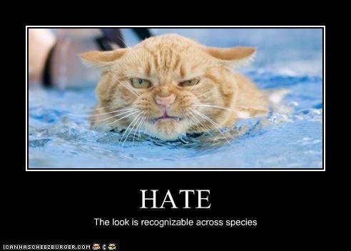 HATE The look is recognizable across species