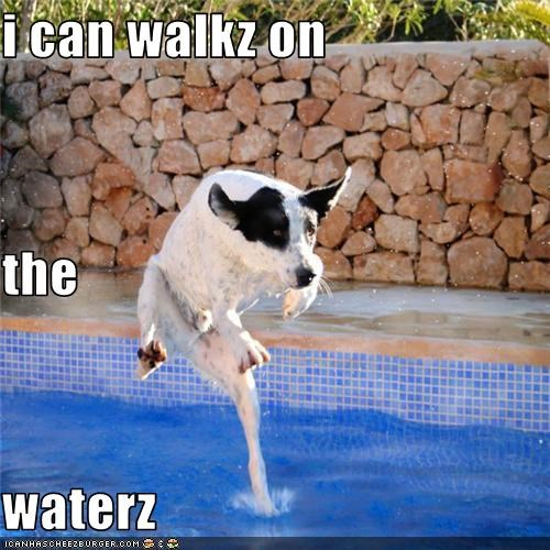 magic dog mixed breed swimming pool walking on water water - 3669005568