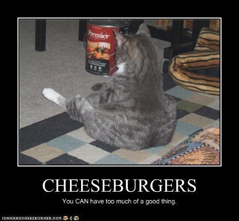 Cheezburger Image 3669167104