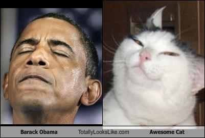animals awesome barack obama Cats politician president - 3670087680