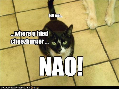 Cheezburger Image 3670386176