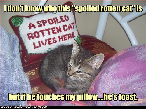 cute kitten spoiled threats - 3670514176