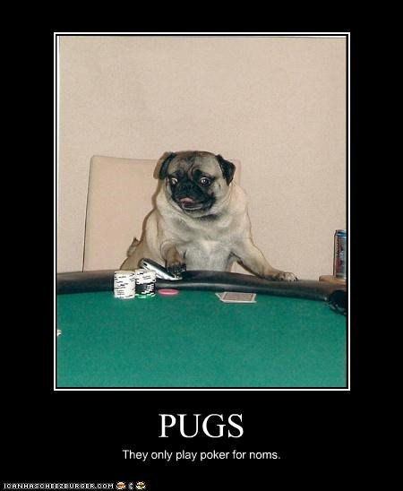 PUGS They only play poker for noms.
