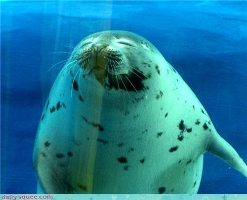 fat,nerd jokes,seal