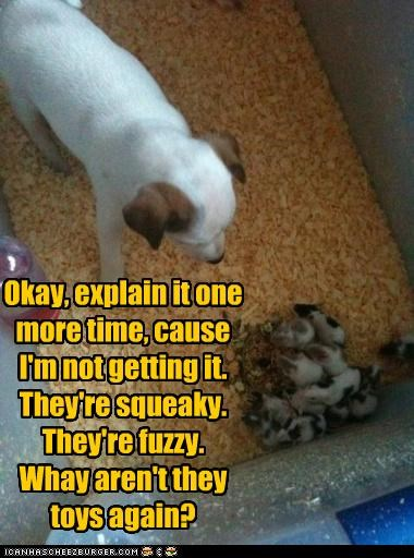 Okay, explain it one more time, cause I'm not getting it. They're squeaky. They're fuzzy. Whay aren't they toys again?