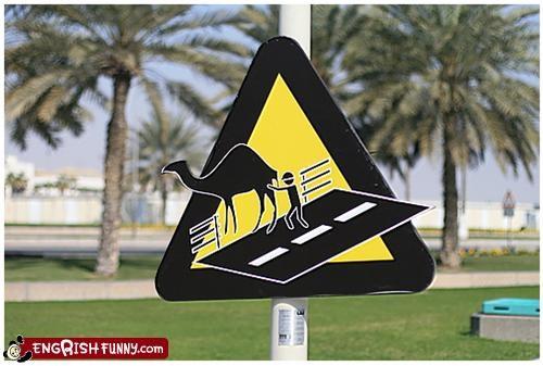 bridge camel sign Unknown wtf
