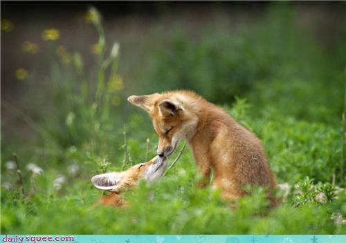 boopable fox love - 3672645376