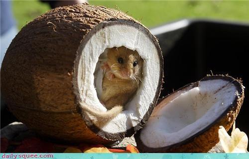 hamster noms Om Nom Monday - 3672713984