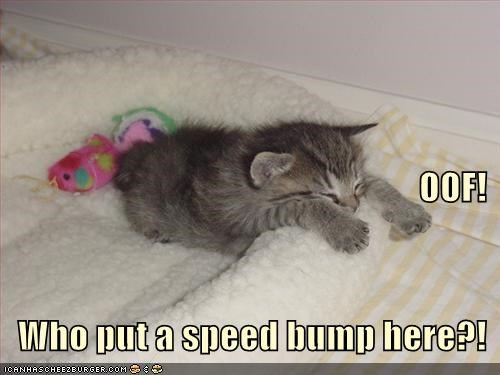 accident caption captioned cat kitten kneading oof sleeping speed bump tripped tripping