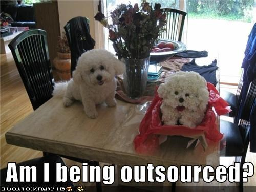 bichon frise,flowers,job,outsourced