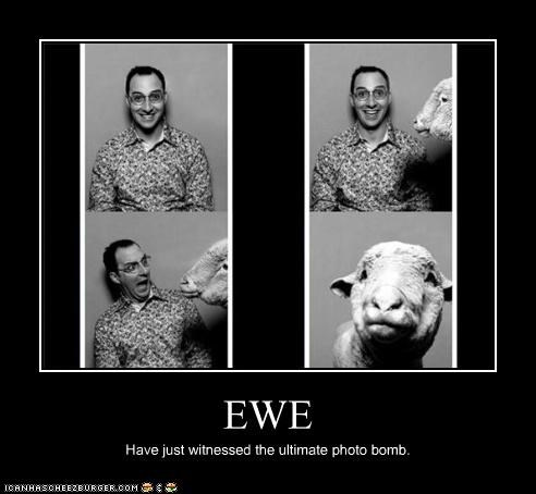 animals arrested development Buster Bluth ewe photobomb TV - 3672918016