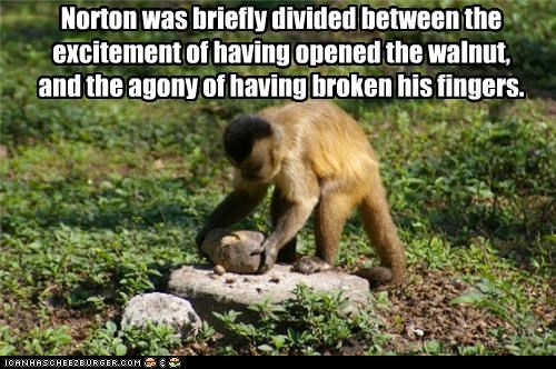 broken caption captioned divided excitement fingers monkey noms pain victory win - 3674083072