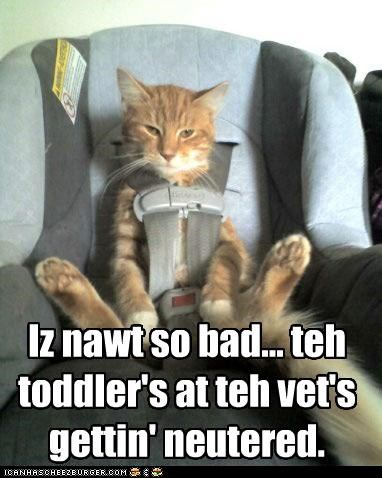 caption,captioned,car seat,cat,Hall of Fame,neutered,optimism,scapegoat,schadenfreude,swap,switch,toddler,vet