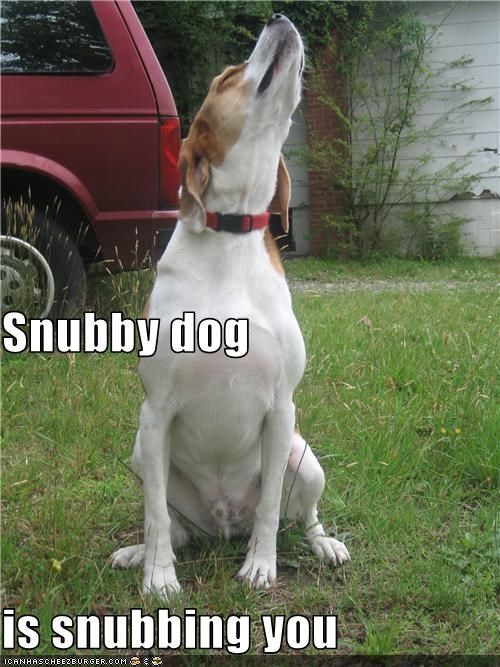 jack russell terrier nose outside snub - 3674367744