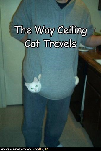The Way Ceiling Cat Travels