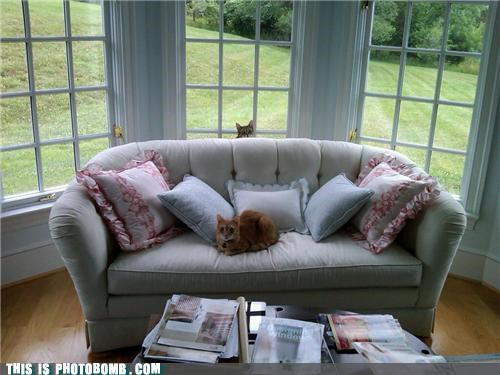 Kitty behind sofa photobomb!