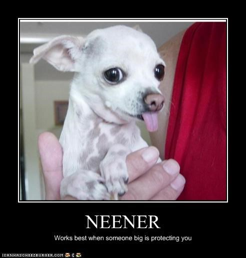 chihuahua neener tease tongue - 3675513600