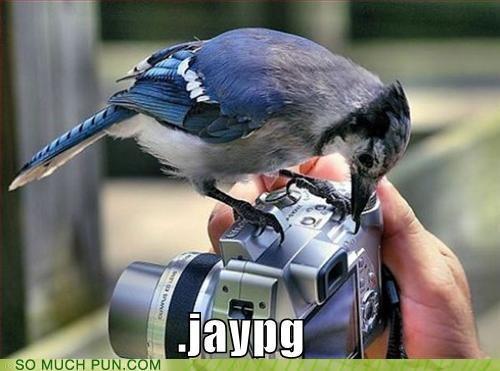 animals birds puns tweet - 3675702784