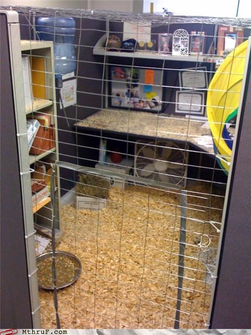awesome boredom cage clever creativity in the workplace cubicle cubicle prank decoration ergonomics hamster hardware ingenuity inspiration mess prank pwned remodel sass sneaky wasteful water cooler wiseass - 3675908608
