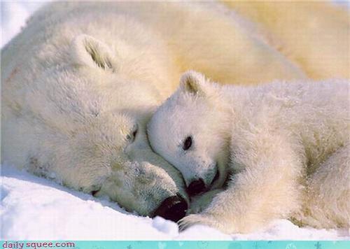 baby,mama,polar bear