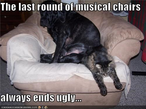 armchair cat last round musical chairs squished - 3676310528