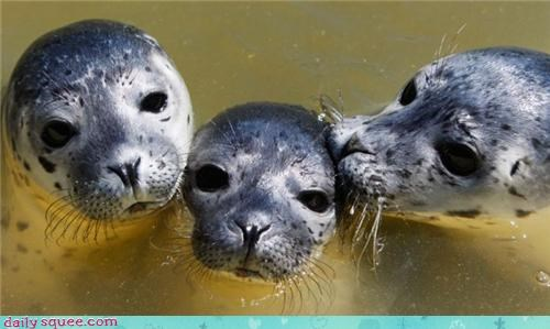creepy,eyes,seal