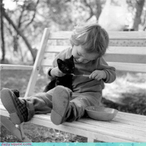 kitten noms Om Nom Monday - 3676361984