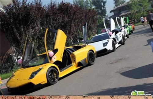 Bling fancy cars lamborghini materialistic modest wedding multiple Lamborghinis nice ride rich people surprise unnecessary Wedding Themes why wtf - 3676838912